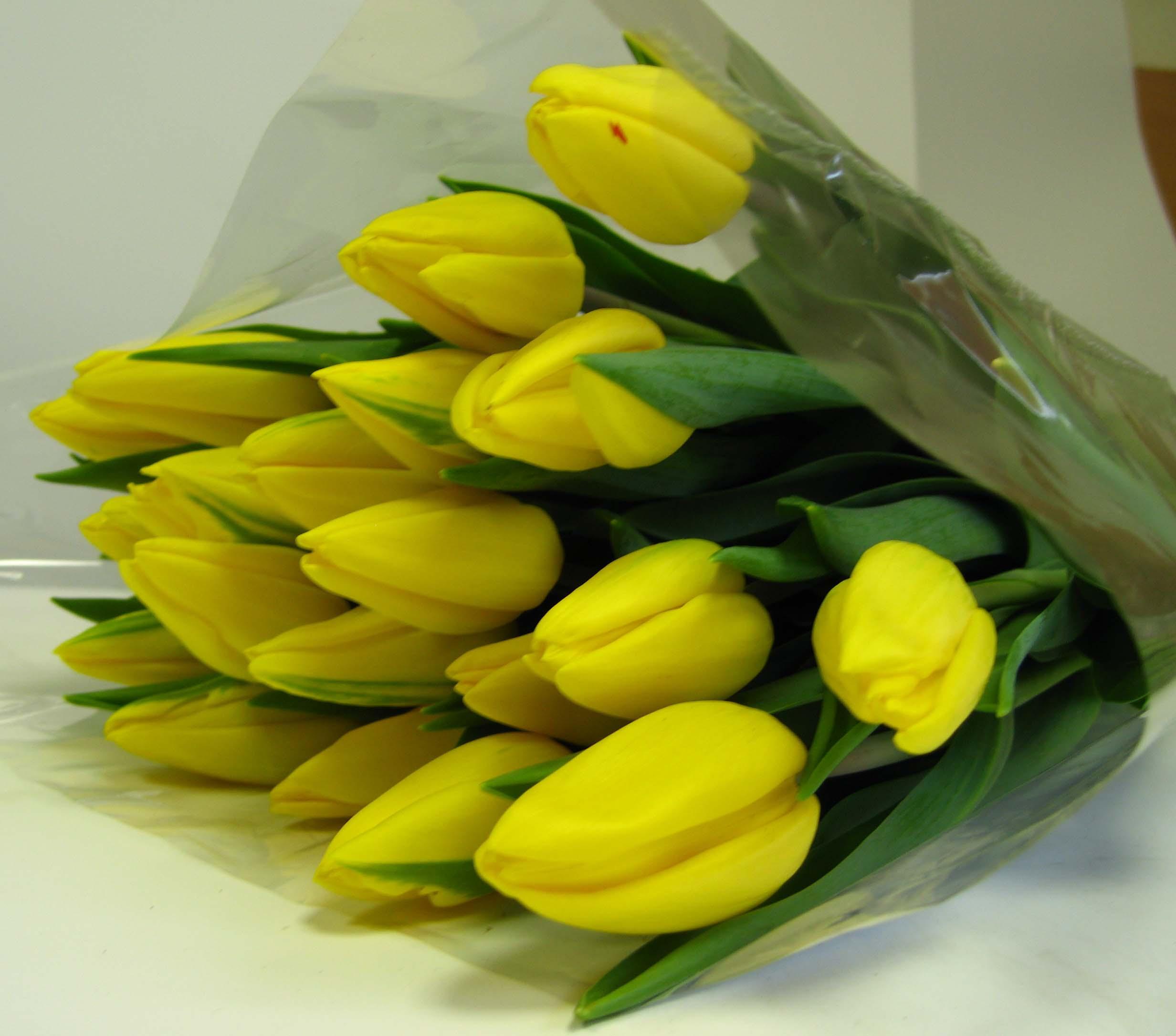 смерти фото букет желтых тюльпанов могу